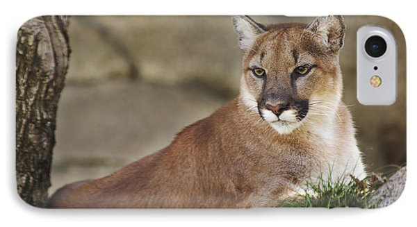 Mountain Lion  IPhone Case by Brian Cross
