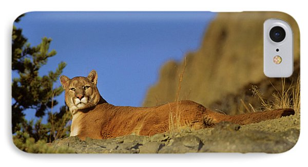 Mountain Lion (felis Concolor IPhone Case by Richard and Susan Day