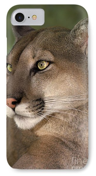 Mountain Lion Portrait Wildlife Rescue IPhone Case by Dave Welling
