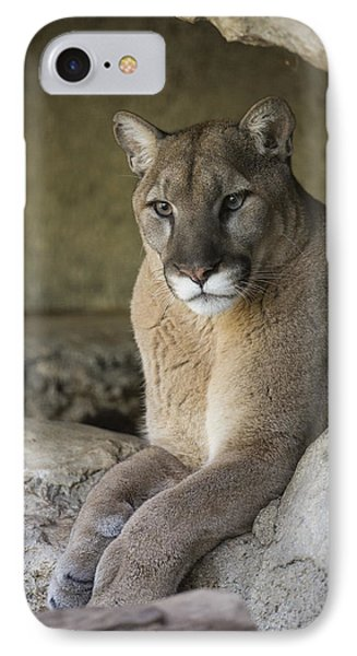 Mountain Lion IPhone Case by San Diego Zoo