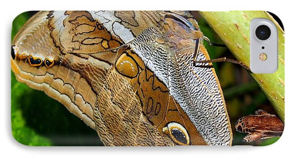 IPhone Case featuring the photograph Mournful Owl Butterfly by Amy McDaniel