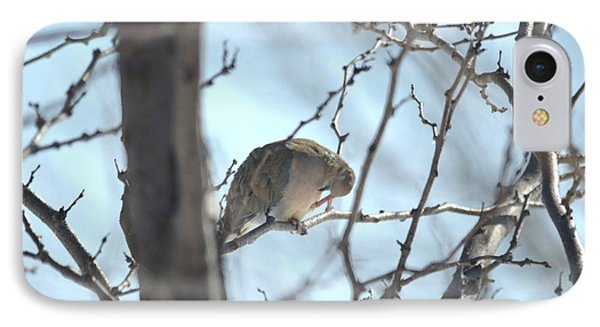IPhone Case featuring the photograph Mourning Dove by Dacia Doroff