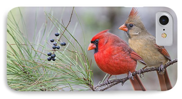 Mr. And Mrs. Redbird In Pine Tree IPhone Case