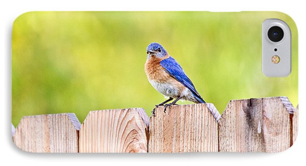 Mr. Bluebird Phone Case by Scott Pellegrin