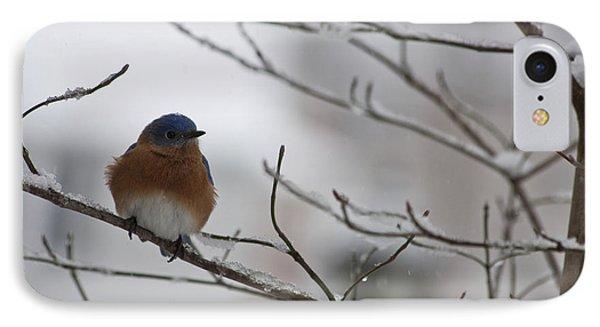 Mr Bluebird Phone Case by Teresa Mucha
