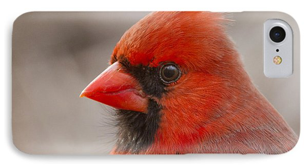 Mr Cardinal Portrait IPhone Case by Mircea Costina Photography