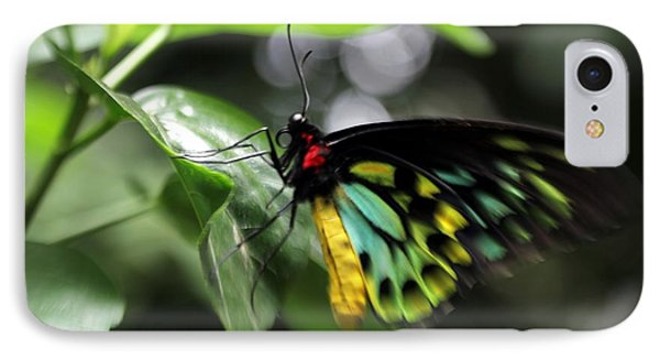 Mr. Cairns Birdwing IPhone Case by Mary Lou Chmura