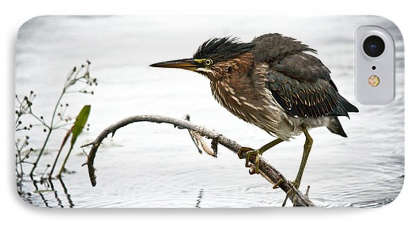 Mr. Green Heron IPhone Case by Cheryl Baxter