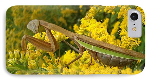 IPhone Case featuring the photograph Mr. Mantis by Sara  Raber