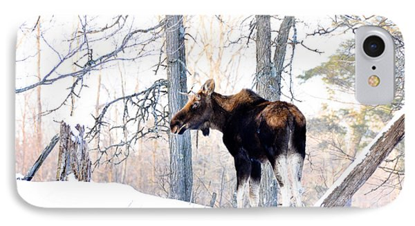 Mr. Moose IPhone Case by Cheryl Baxter