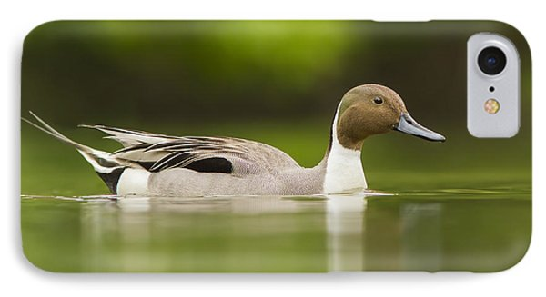 Mr Pintail  IPhone Case