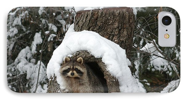 Mr. Raccoon IPhone Case by Diane Bohna