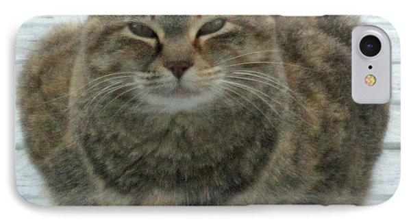 Muffin The Feral Cat IPhone Case
