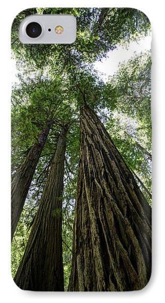 Muir Woods I IPhone Case