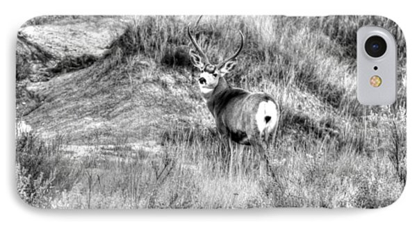 Mule Buck B/w IPhone Case by Kevin Bone