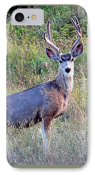 Mule Deer Buck IPhone 7 Case by Karen Shackles