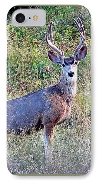IPhone Case featuring the photograph Mule Deer Buck by Karen Shackles