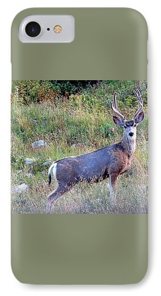 IPhone 7 Case featuring the photograph Mule Deer Buck by Karen Shackles