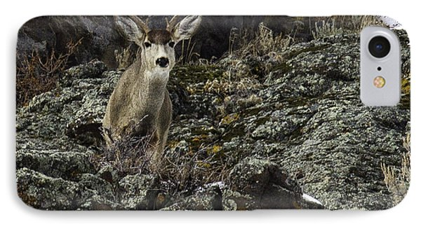 IPhone Case featuring the photograph Mule Deer Buck by Susi Stroud