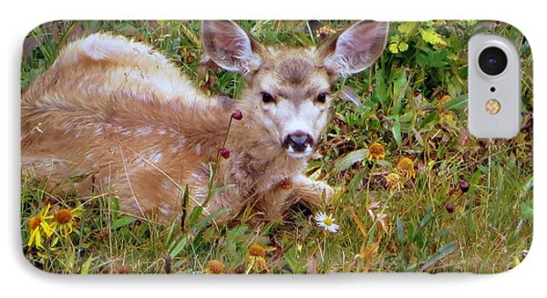 IPhone Case featuring the photograph Mule Deer Fawn by Karen Shackles