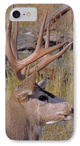 Mule Deer IPhone Case by Lynn Sprowl