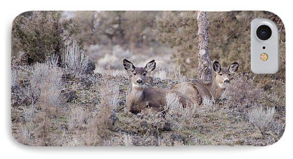 Mule Deer Nap IPhone Case