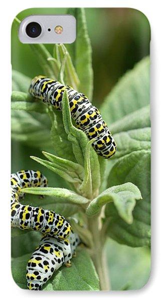 Mullein Moth Caterpillars IPhone Case by David Aubrey