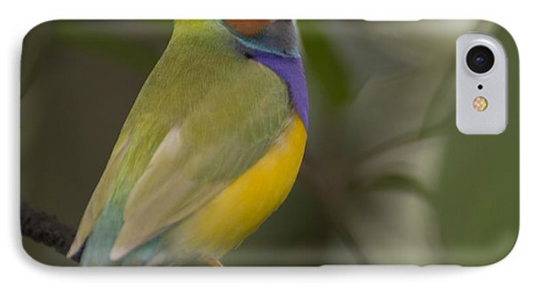 Multicolored Beauty Phone Case by Penny Lisowski
