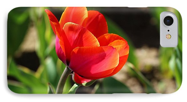 IPhone Case featuring the photograph Multicolored Tulip by Lynn Hopwood