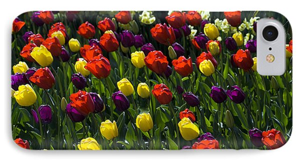 Multicolored Tulips At Tulip Festival. IPhone Case by Yulia Kazansky