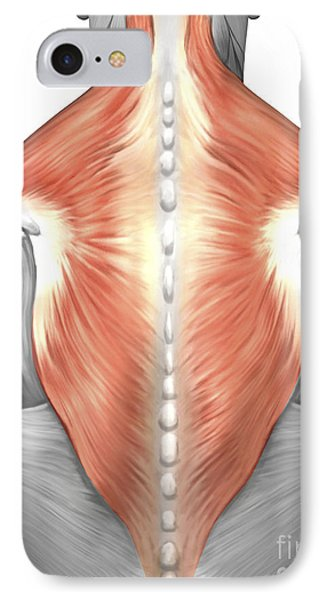 Muscles Of The Back And Neck IPhone Case by Stocktrek Images