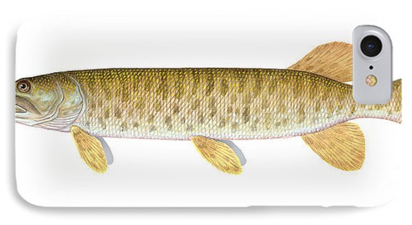 Muskie IPhone Case by Carlyn Iverson