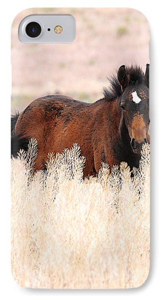IPhone Case featuring the photograph Mustang Colt In The Grasses by Vinnie Oakes