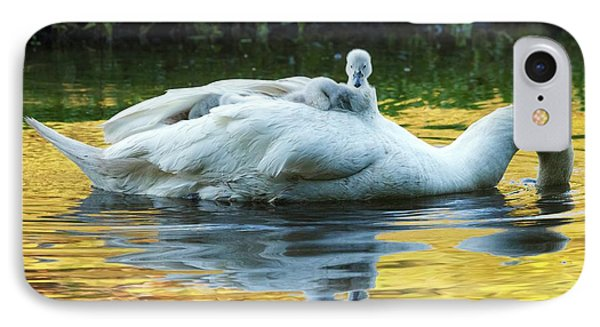 Mute Swan And Cygnets IPhone Case by Alex Hyde