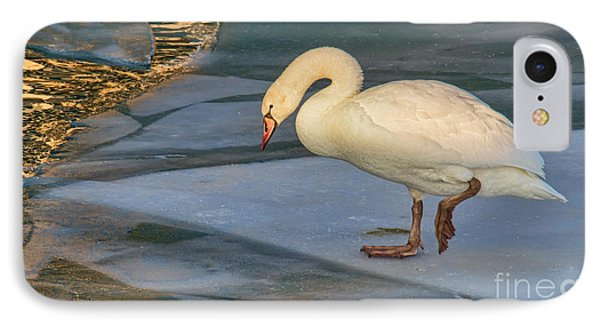 Mute Swan On Ice  IPhone Case by Gerda Grice
