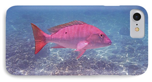 Mutton Snapper Profile IPhone Case by Carey Chen
