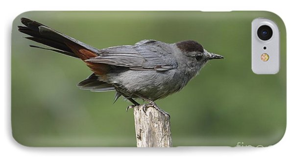 My Catbird IPhone Case by Randy Bodkins