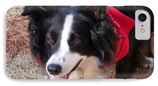IPhone Case featuring the photograph Female Border Collie by Eunice Miller
