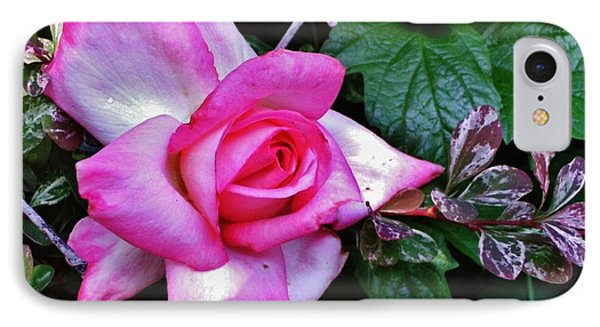 IPhone Case featuring the photograph My Perfect Tea Rose by VLee Watson