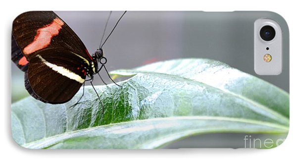 IPhone Case featuring the photograph My Pretty Butterfly by Carla Carson