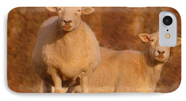 IPhone Case featuring the photograph My Sheep ...   by Lydia Holly