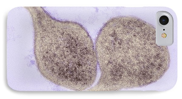 Mycoplasma Genitalium Bacteria IPhone Case by Thomas Deerinck, Ncmir