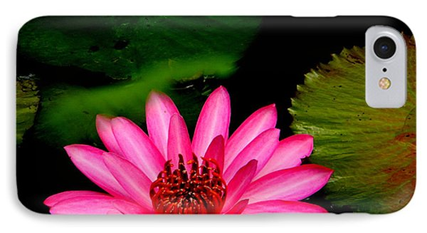 Mystical Water Lilly IPhone Case by Jodi Terracina