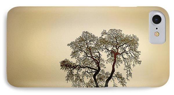 Naked Trees 4 IPhone Case by Artist and Photographer Laura Wrede