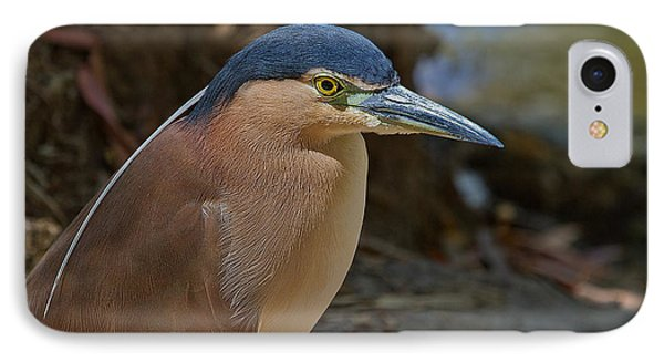 Nankeen Or Rufous Night Heron Phone Case by Mr Bennett Kent