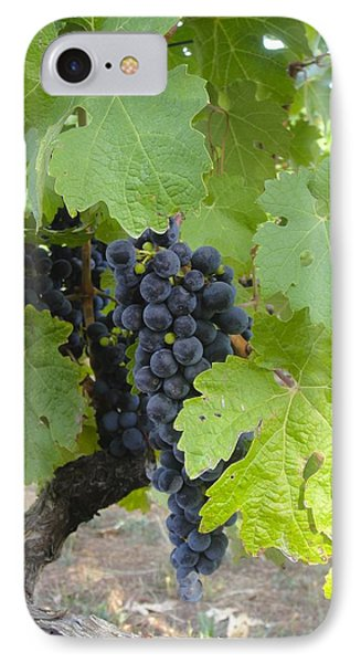 Napa Valley Vineyard Grapes Phone Case by Jennifer Lamanca Kaufman