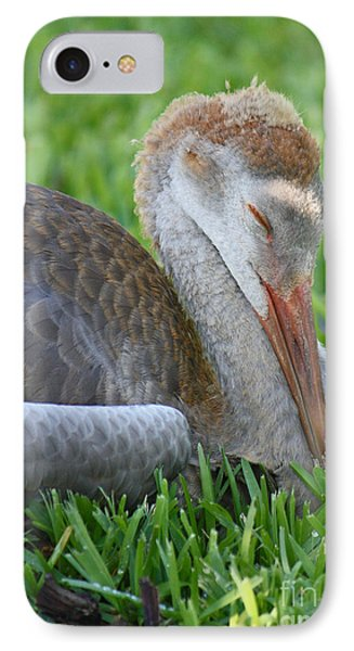 Napping Sandhill Baby Phone Case by Carol Groenen