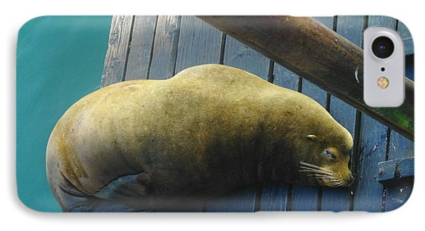Napping Sea Lion Phone Case by Jeff Swan