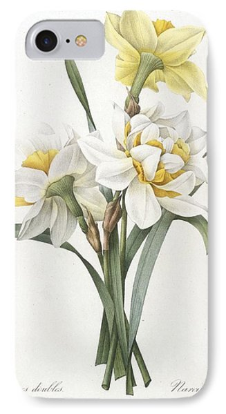 Narcissus Gouani Double Daffodil IPhone Case by Pierre Joseph Redoute