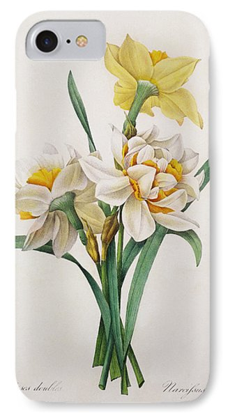 Narcissus Gouani IPhone Case by Pierre Joseph Redoute